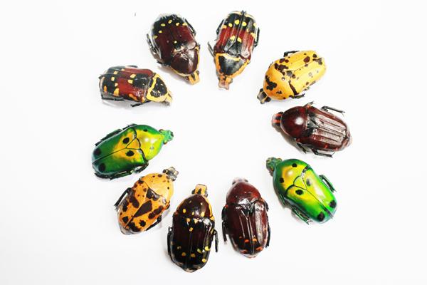 Des insectes de toutes les couleurs pour de futurs bijoux